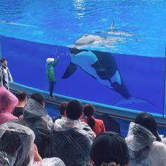 上海海昌海洋公園用戶圖片