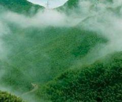 中國大竹海用戶圖片