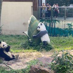 熊貓館用戶圖片