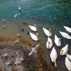 Rousseau Island User Photo