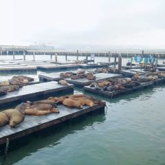 Sea Lion Center用戶圖片