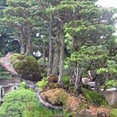 Bishopsford Bonsai Garden用戶圖片