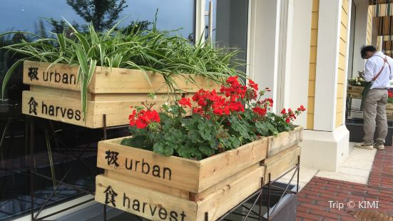 The Urban Harvest (Disney Town)