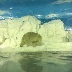 老虎灘海洋公園用戶圖片