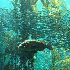 Aquarium of the Bay User Photo
