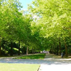 Parc de Bruxelles User Photo