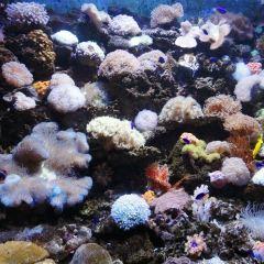 Aqua Planet 63 User Photo