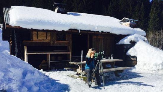 Alpinus Lodge