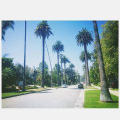 CUT(Beverly Hills) User Photo
