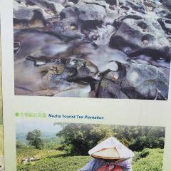 Maokong Jhangshu Trail User Photo