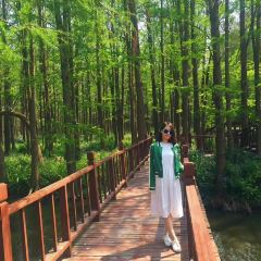 Lizhong Water Forest Park User Photo