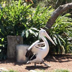 Currumbin Wildlife Sanctuary User Photo