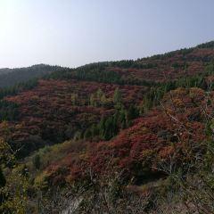 Dingjiayu User Photo