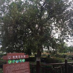 Jiulongkou Scenic Area User Photo