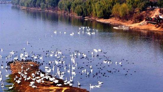 雙龍湖濕地公園