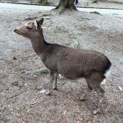 Nara Park User Photo