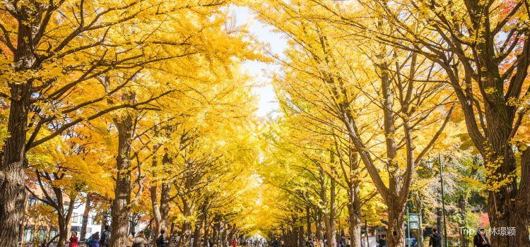 北海道大學1