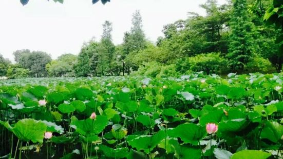 Huangpu Zhongshan Park