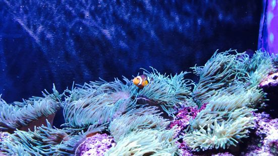 尼亞加拉水族館