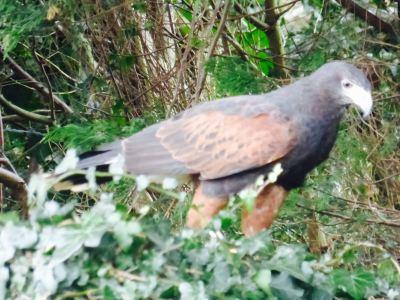Turbary Woods Owl and Bird of Prey Sanctuary