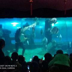 Nantong Ocean World User Photo