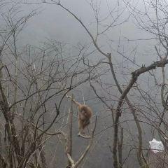 Mt. Emei Natural Ecology Monkey Reserve User Photo