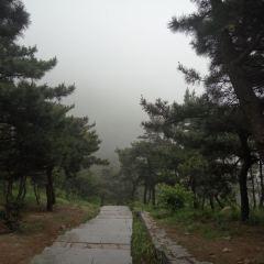 부산 삼림 공원 여행 사진