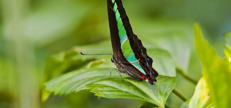 쿠알라룸푸르 나비공원1