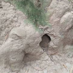 꾸찌 땅굴 여행 사진