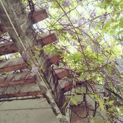창러 시 여행 사진