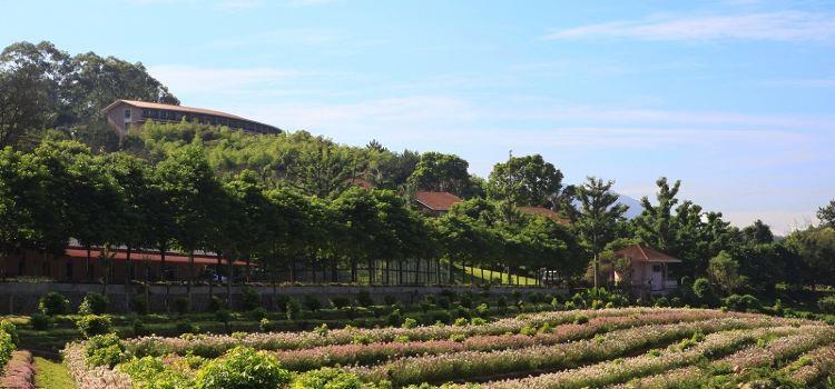 Yannanfei Tea Fields1