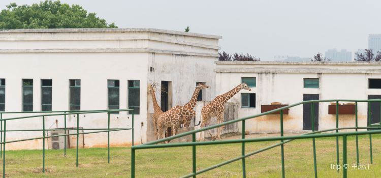 合肥野生動物園2