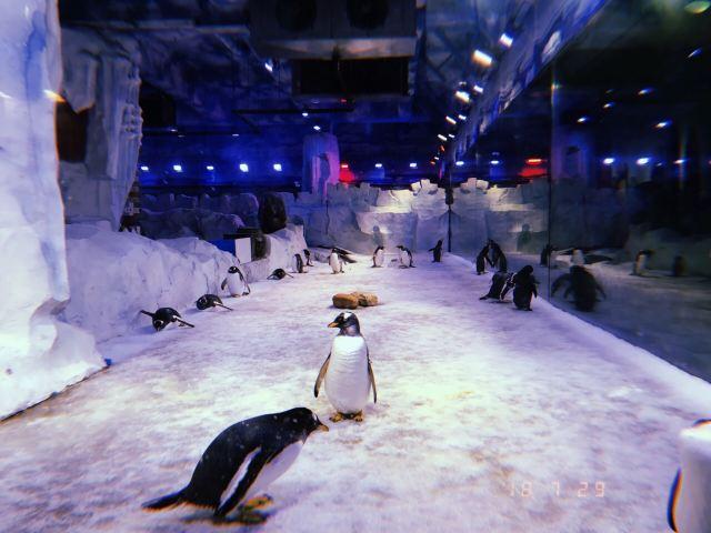 新華聯大白鯨海洋公園