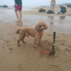 Haiyang Huayuan Bieshu Beach User Photo