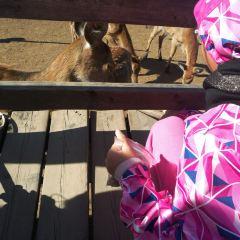 皇家鹿苑用戶圖片