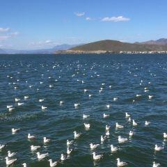 候鳥保護區用戶圖片