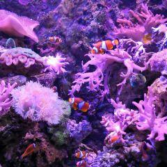 南昌海洋公園用戶圖片