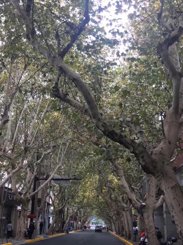 Yuyuan Road