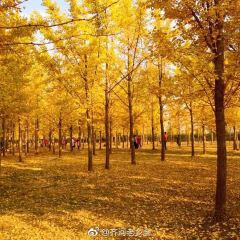 Jinan Huanghe River Forest Park User Photo