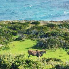 好望角自然保護區用戶圖片