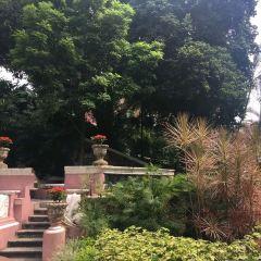 卡梅爾花園 用戶圖片