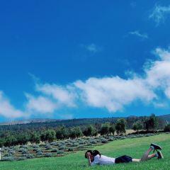AKL薰衣草農場用戶圖片