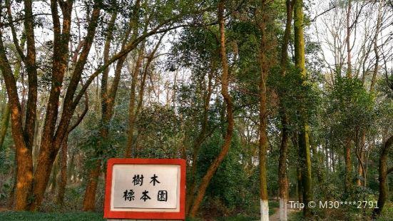 江西農業大學樹木標本園