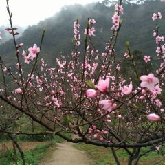 Wuhuashan User Photo