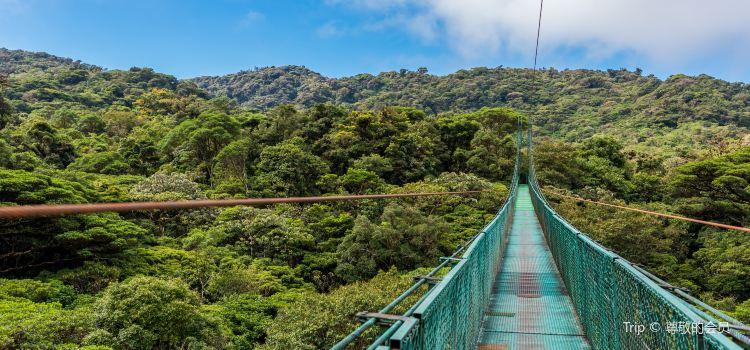 Monteverde Cloud Forest Biological Preserve1
