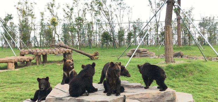西伯利亞棕熊展區2
