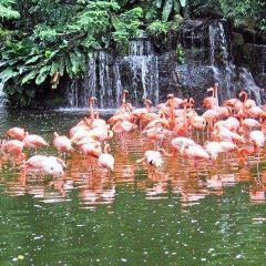 火烈鳥野生棲息地用戶圖片