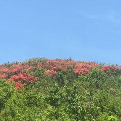 Dazhuhai Forest Park User Photo