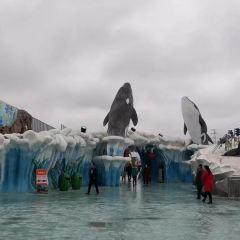 Jiufeng Arctic Ocean World User Photo