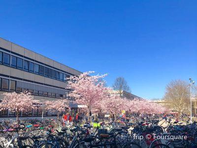 哥廷根大學